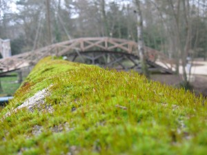 mosssporophytes